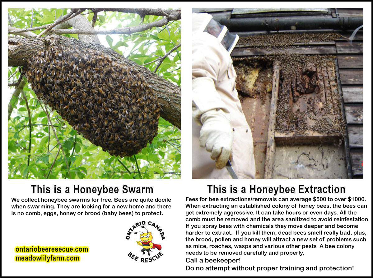 Ontario Bee Rescue Canada Services